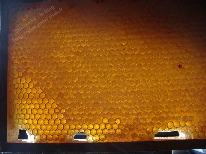 Cadre de miel (2013)