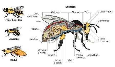 abeille14