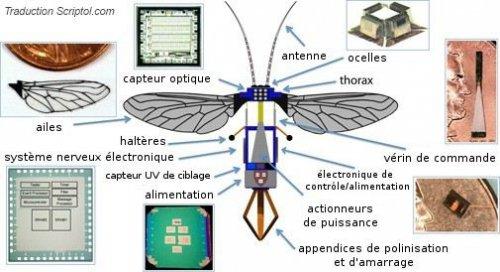 robot-abeille-3a3f8