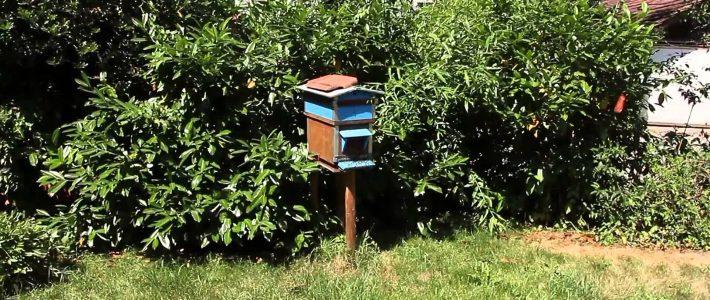 ruche colorée bleue