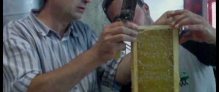 Les apicolporteurs miel y festent – version web