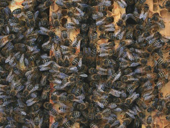 Parrainage 1 ruche