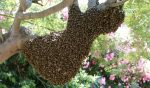 Vidéo –  récolte du miel (désoperculation, extraction et filtration)