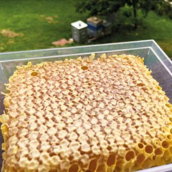 Miel en rayons grand